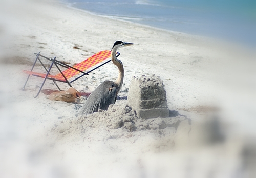 Tired of Fishing All Day Long, Elmer Made His Own Sandcastle