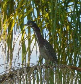 Birdcrop_2