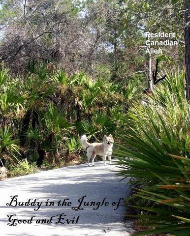Buddy_jungle