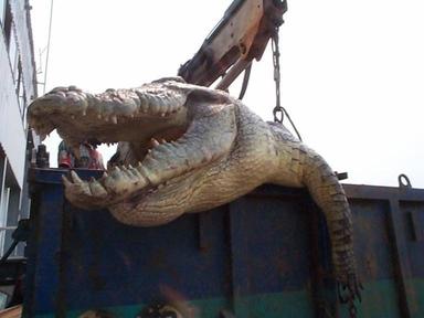Gator1_4