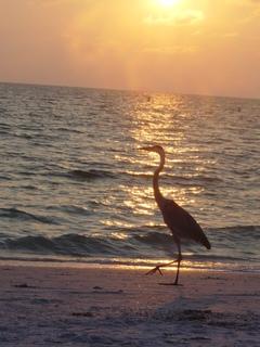 Heron_beach_2005_007