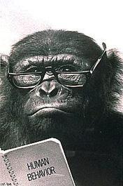 Sdz_0446chimpanzeeteacher