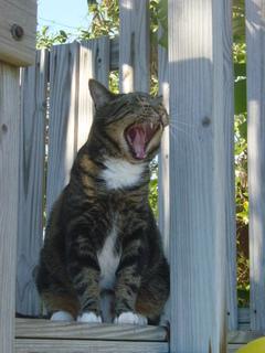 Yawn_1